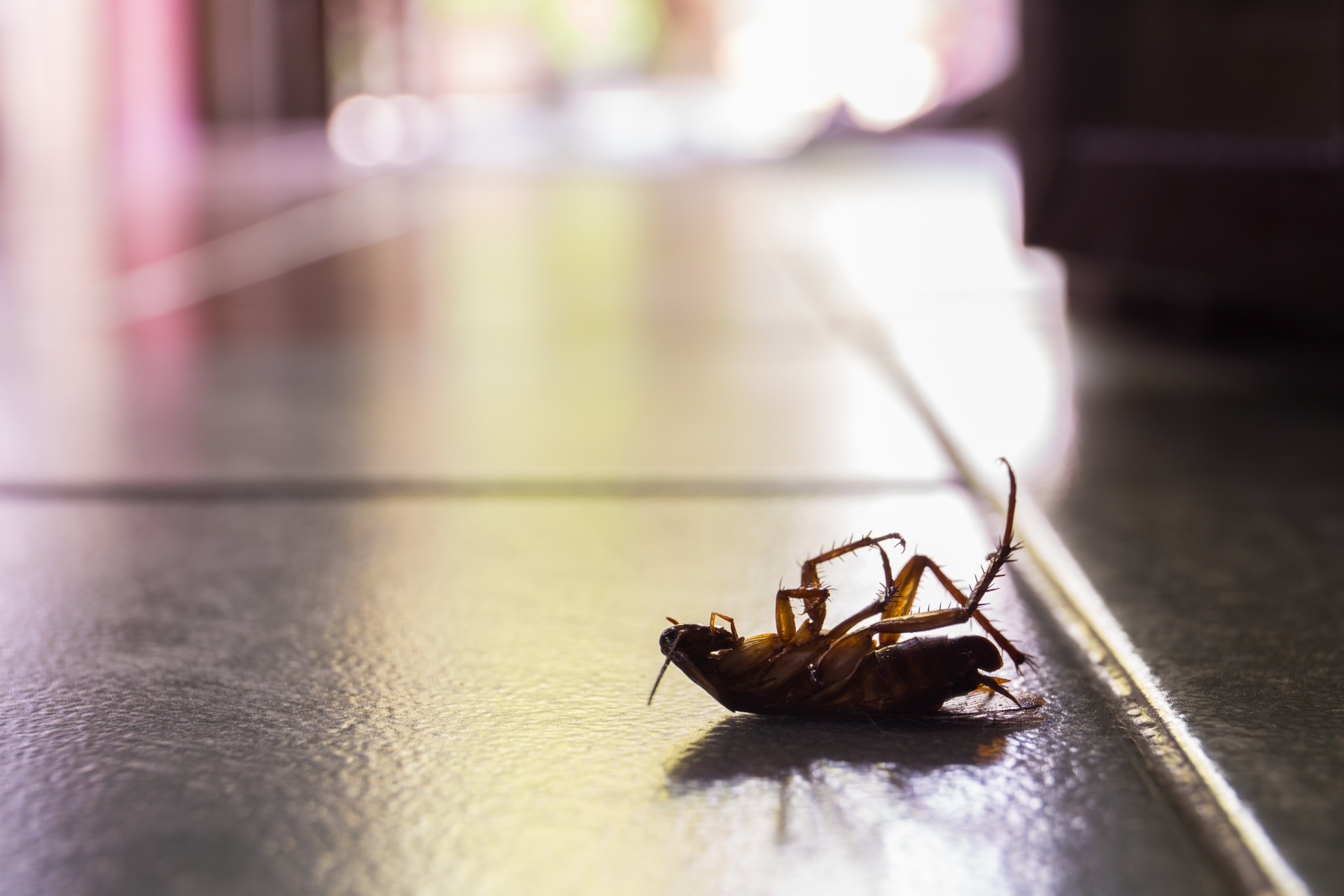 Cockroach Control, Pest Control in Carshalton, Carshalton Beeches, SM5. Call Now 020 8166 9746