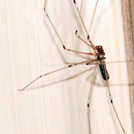 Spiders, Pest Control in Carshalton, Carshalton Beeches, SM5. Call Now! 020 8166 9746